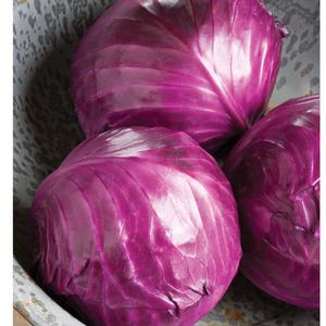 Cabbage Ruby Perfection