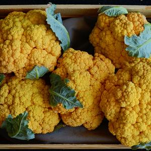 Cauliflower Flame Star