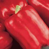 Peppers Red Beauty - bell