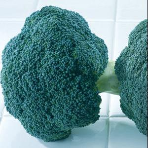 Broccoli Destiny