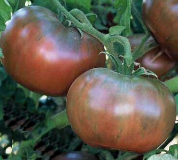 Tomato Cherokee Purple