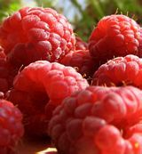 Raspberry Amity - red - everbearing