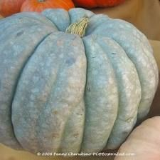 Pumpkins Specialty Blue