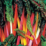 Swiss Chard Bright Lights - mix