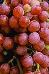 Grapes Suffolk Red - Seedless