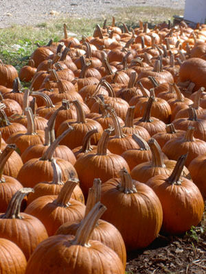Fall Decor- Pumpkins 30-40#