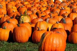 Fall Decor- Pumpkins 40# +