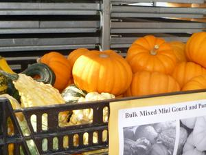 Pumpkin - mixed mini gourds and pumpkins
