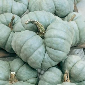 Fall Decor- Pumpkins 'Triamble'