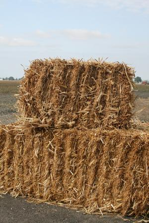 Fall Decor- Straw Wheat
